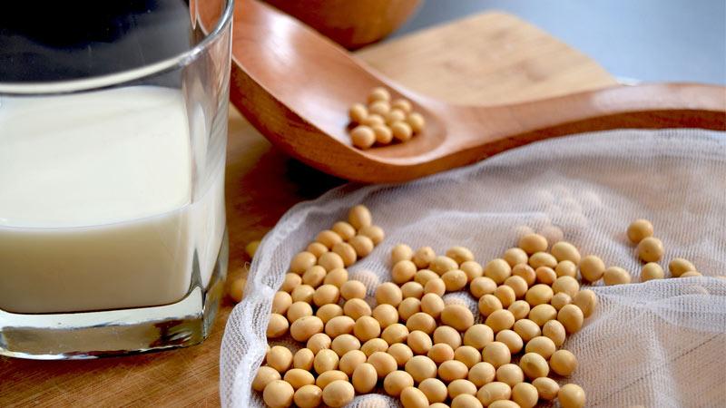 productos lácteos por soja